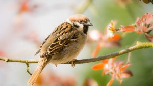 sparrow love song changing tune