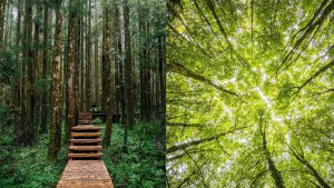 japanese art of forest bathing ecotherapy