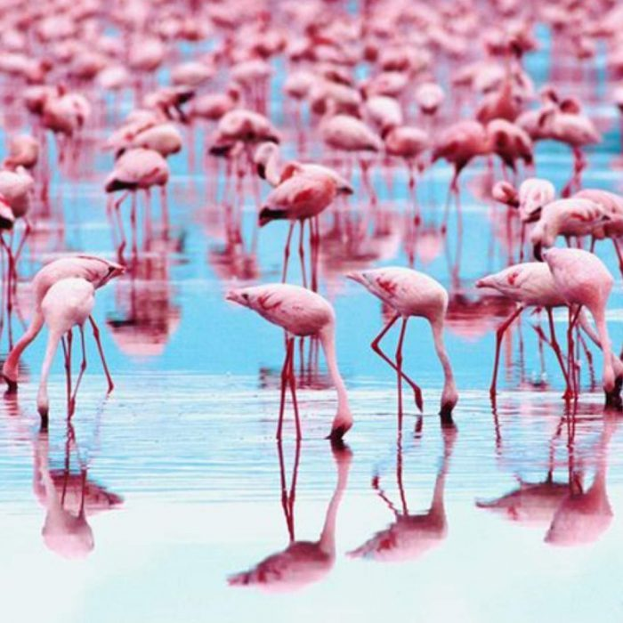 Why Are Flamingos Pink? The Answer Will Surprise You