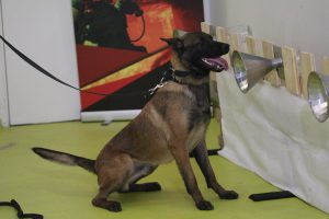 covid sniffer dog