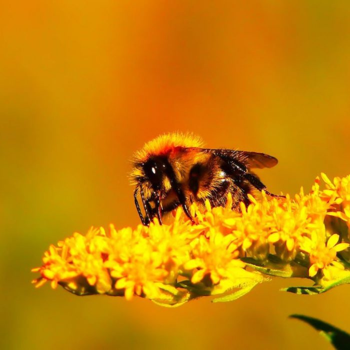 World Bee Day: Is Honeybee Venom The Answer To Killing Cancer Cells?