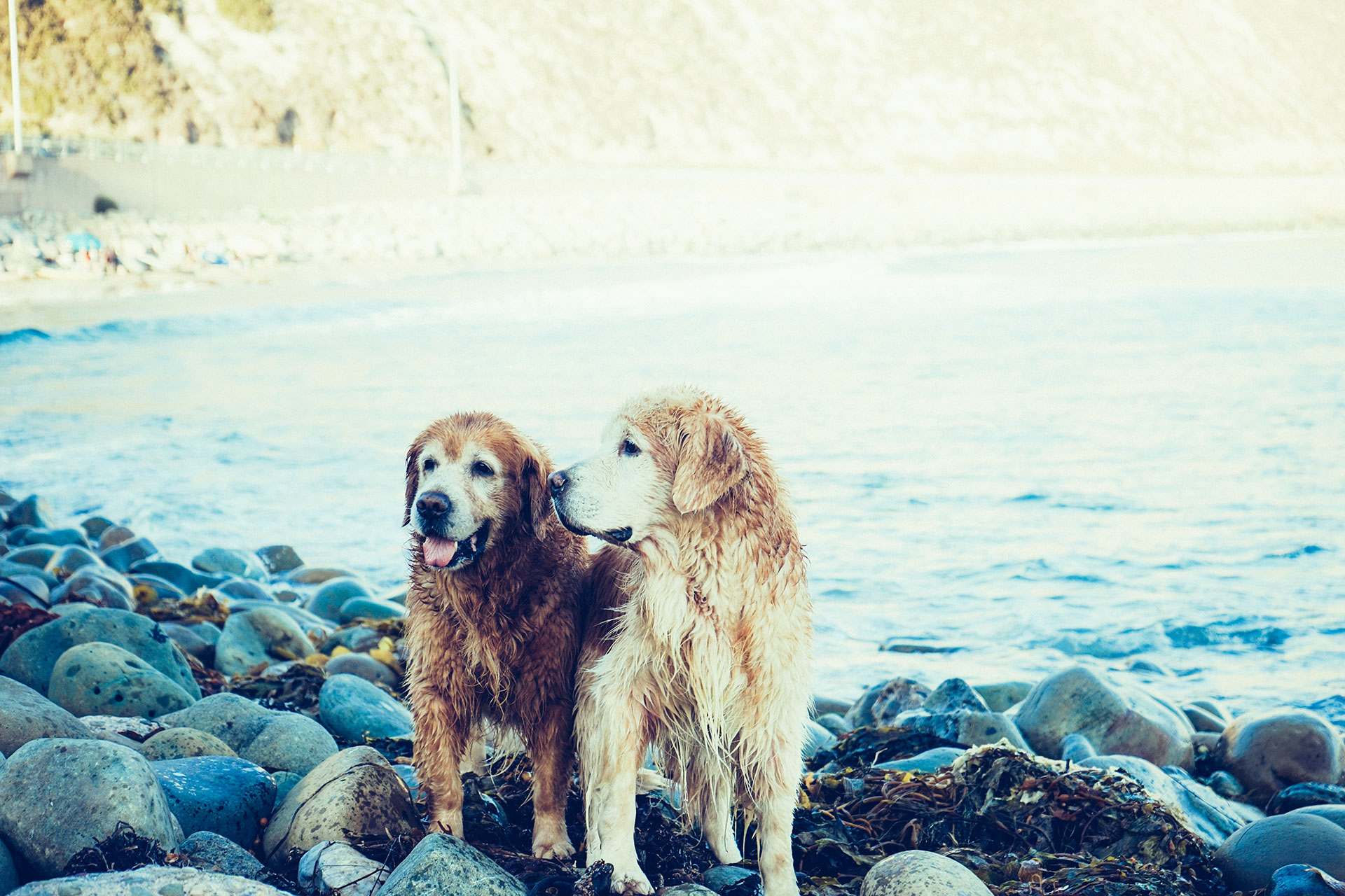 Here's Why Dogs Sniff So Much