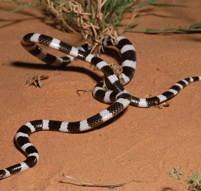 New Snake Species Discovered