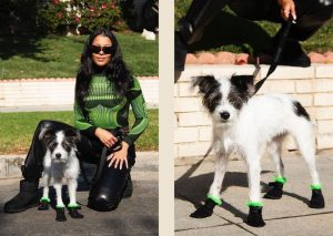 UGG boots for dogs
