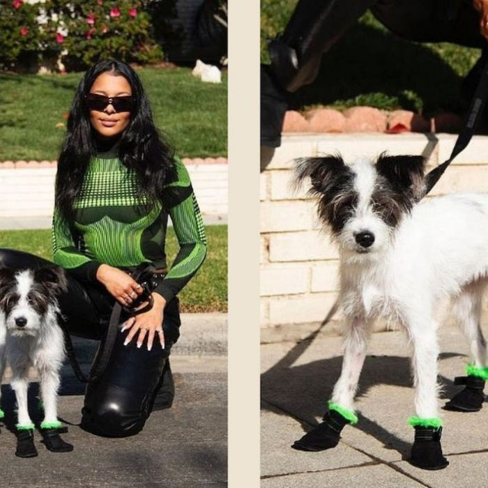 UGGs For Dogs: Fluffy Boots For Your Furry Friends