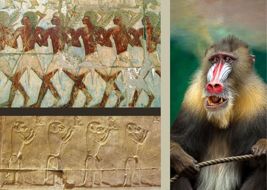 Baboons, Punt