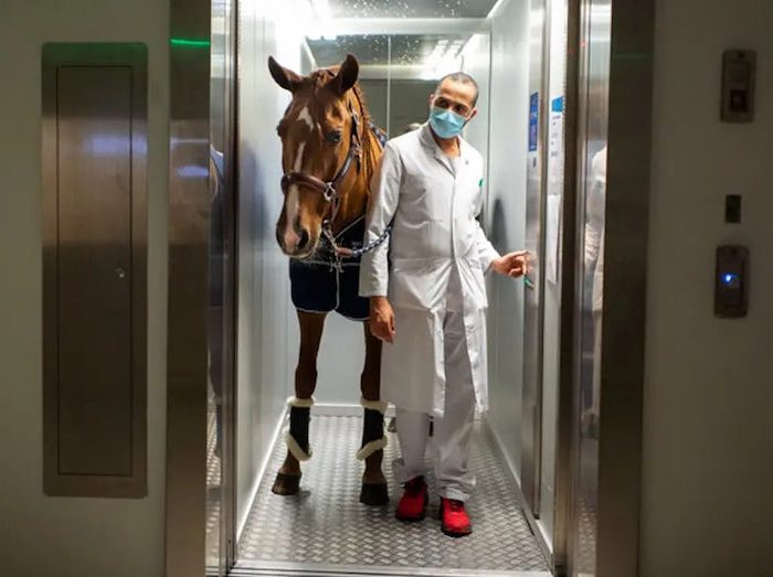 Dr Peyo: Therapy Horse Chooses His Patients With Great 'Equine-imity'