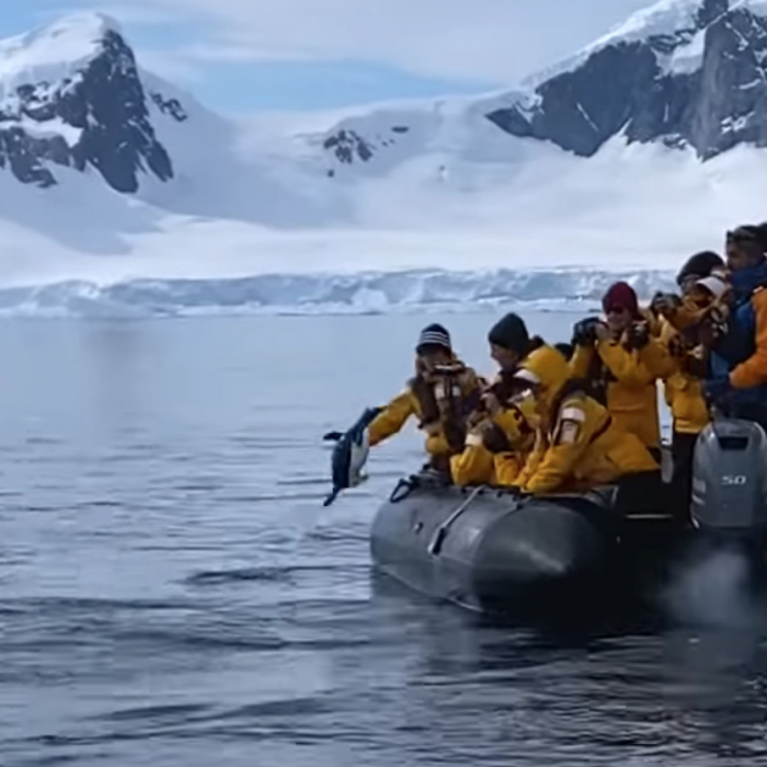 The Great Escape: Penguin Evades Killer Whales By Jumping Onto Tourist Boat