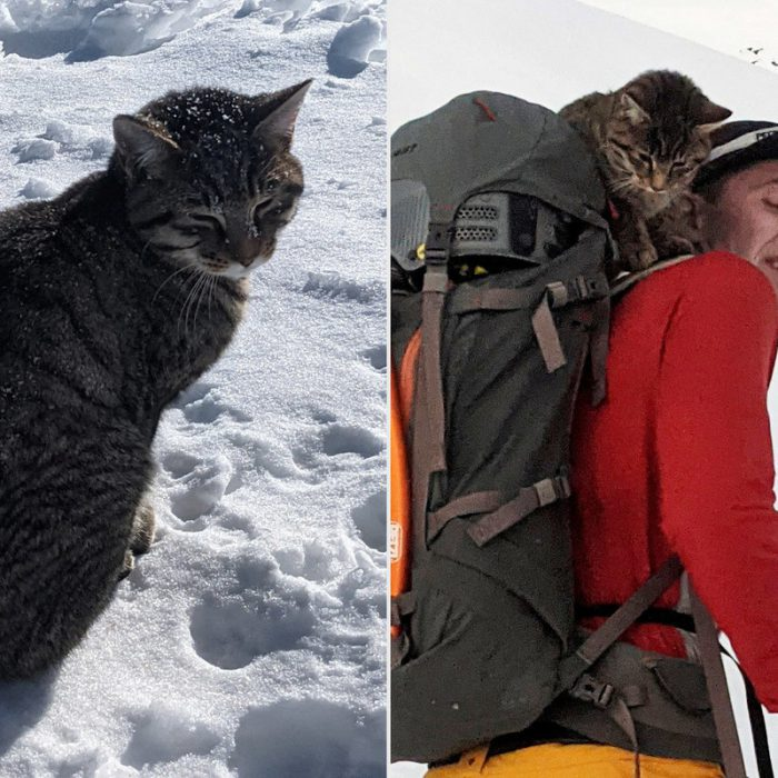 Lost Cat At 3,000m in Swiss Alps Finds Way Home