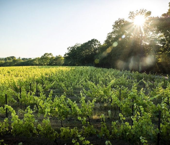 Wine-Making While Taking Care Of The Planet? Sounds Good To Us!