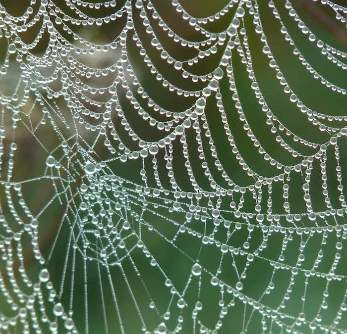 Scientists Have Produced Music Using Spider Webs!