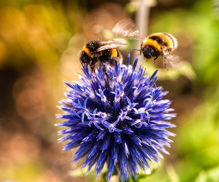 The Business Of Bees And Why We Should Care