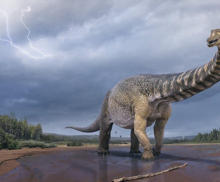 Australia's Largest Dinosaur Has Been Discovered And It Is A Whopping 30 Metres!