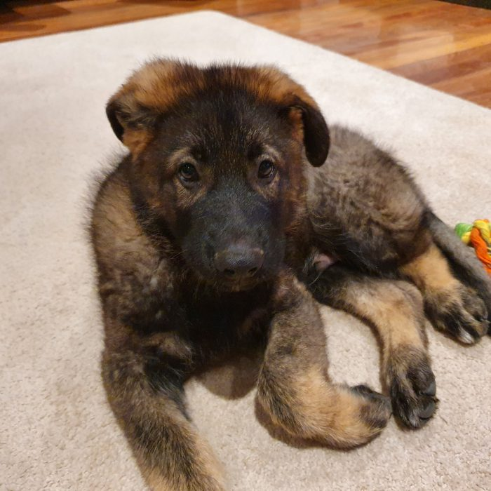 Puppy Love: How Pets Improve Our Health