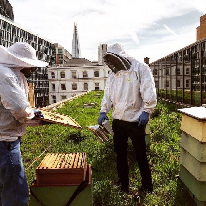 Plan Bee: The Buzz On London's Hotels