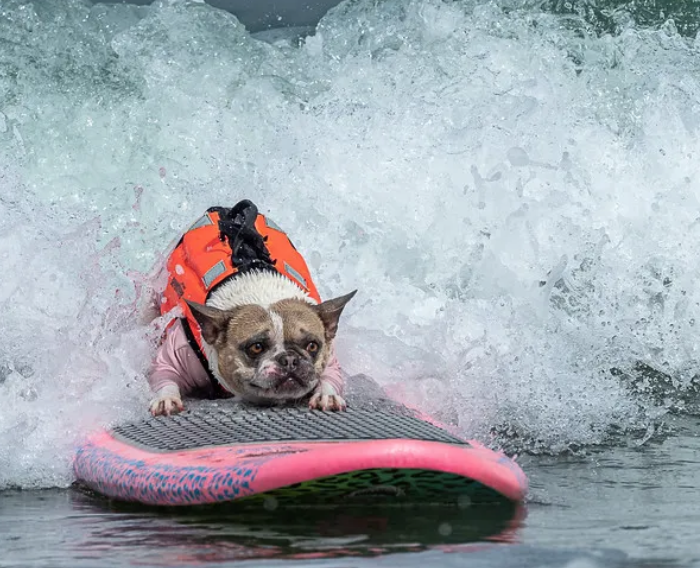 Hanging Ten With Man's Best Friend At The World Dog Surfing Championships